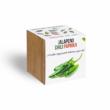 Jalapeno chili paprika növényem fa kockában