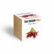 Thai Dragon chili növényem fa kockában