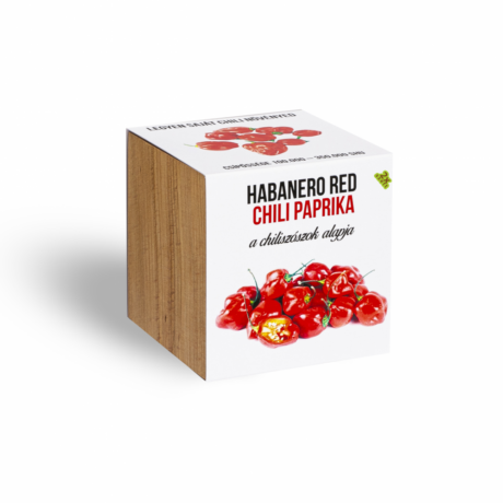 Piros habanero chili paprika növényem fa kockában
