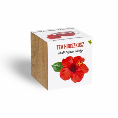 Tea Hibiszkusz növényem fa kockában
